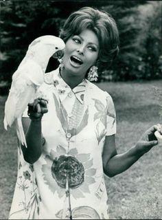 Sophia Loren cavorting with a Cockatoo