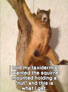 Hilarious pictures post Massive giggles ahead - Prank - Prank meme - - Funny taxidermist squirrel prank The post Hilarious pictures post Massive giggles ahead appeared first on Gag Dad. Funny Adult Memes, Funny Jokes For Adults, Funny Animal Jokes, Stupid Funny Memes, Funny Cartoons, Funny Animals, Funny Stuff, Adult Humor, Hilarious Pictures
