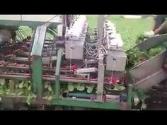 Radish Harvester Machine