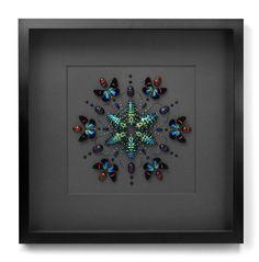 Christopher Marley  Pheromone - amazing beetle and butterfly art