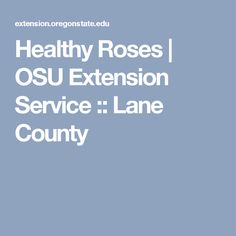 Healthy Roses | OSU Extension Service :: Lane County