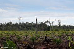 The challenge of trying to save Indonesia's forests