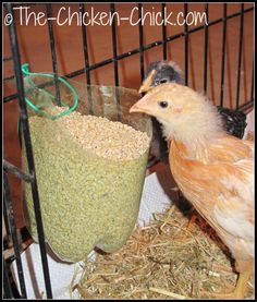 DIY Chicken Feeder for Brooder, Infirmary or Maternity Ward Best Chicken Coop, Chicken Chick, Backyard Chicken Coops, Chickens Backyard, Chicken Lady, Best Egg Laying Chickens, Baby Chickens, Raising Chickens, Chicken Koop