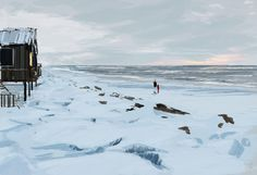 Mid March. #pascalcampion #Alaska #forgetmenot