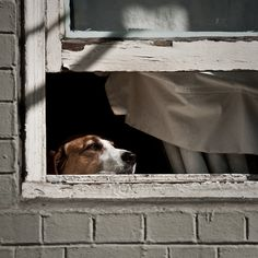 É simplesmente inspirador. Cachorros com expressões tristes ou de esperançosos já são encantadores, capazes de fazer qualquer pessoa se apaixonar. Mas se e
