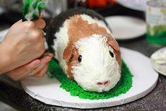 Guinea Pig Cake Process | Xiaolu // 6 Bittersweets | Flickr