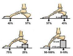 anatomy-and-high-heels - Google Search