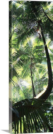 Tropical Botanical Gardens, Hawaii