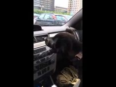 Happy puppy experiences air conditioning for the first time