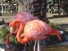 pink, orange & white!!!!    flamingos   Dollycas's Thoughts: COZY WEDNESDAY - With Author Karen E. Olson ...