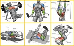Top 7 Workout Routines For Building Muscle 5 Day Workout Routine, 7 Workout, Gym Workout Chart, Workout Exercises, Workout Plans, Leg Workouts For Men, Chest Workouts, Fun Workouts, Squat