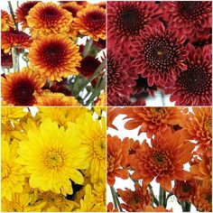 These Four Fall Flowers are On Sale - OFF! 2012 - Order yours today! Flowers For You, Fall Flowers, Fresh Flowers, Wedding Flowers, Fall Wedding, Diy Wedding, Wedding Stuff, Peonies, Tulips