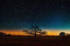 October Tree at Twilight by Matt Anderson