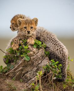 beautiful-wildlife:  Little BoysbyIris Braun Masai Mara, Kenya