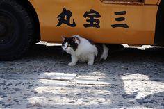 Cat on Tashirojima, Cat Island