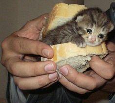 Unbelievable Funny Pictures Of Today's - 29 Memes Sad Cat Meme, Cute Cat Memes, Hilarious Memes, Cute Funny Animals, Cute Baby Animals, Funny Cats, Cute Kittens, Cats And Kittens, Unbelievable Funny Pictures