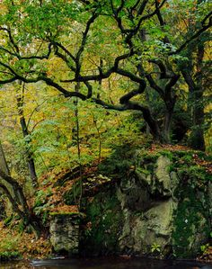 Seeker of Truth, Beauty and Wisdom   wanderthewood:   Harz Mountains, Germany by...
