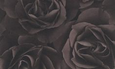 You can find the black rose wallpaper 525618 from the Rasch Crispy Paper collection - Charcoal Wallpaper, Powder Room Wallpaper, Paper Wallpaper, Rose Wallpaper, Wallpaper Ideas, Chocolate Roses, Pattern Paper, Decoration, Print Patterns
