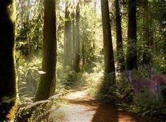 deer in forest - Bing images