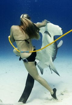 """everydaysharks: """" tigerrrsharrrk: """" Liz Parkinson lays her hand daringly close to the razor-toothed mouth of this deadly hammerhead shark as they share a dance underwater See More Amazing Shark. Underwater Life, Underwater Photos, Underwater Photography, Underwater Swimming, Shark Pictures, Funny Pictures, Shark Pics, Sea Shark, Shark Diving"""