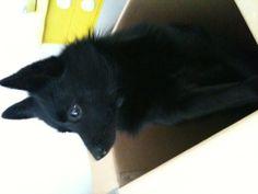 Bavo sitting in a box