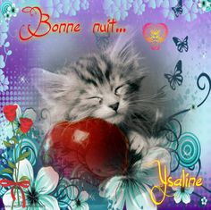 Cat Template, Templates, Images, Messages, Cats, Bonjour, Sweet Night, Nice Quotes, Men