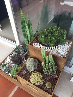 Cactus and succulent composition - Plantas wedding Terrarium succulentes Blooming Succulents, Cacti And Succulents, Planting Succulents, Cactus Plants, Planting Flowers, Indoor Cactus, Indoor Plants, House Plants Decor, Plant Decor
