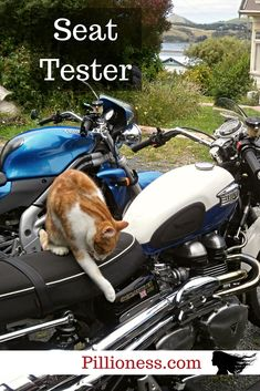 My motorcycle cat Hector knows a good bike seat when he sees one! Bike Seat, Cool Bikes, Cat Love, Mustang, Biker, Motorcycles, Cats, Funny, Animals