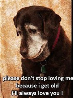 Senior Dogs will never get old loving us.