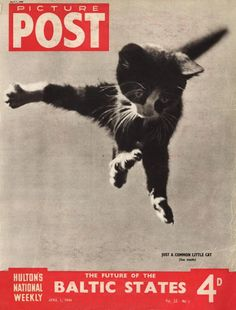 1st April 1944: A little cat leaps high into the air, its paws splayed wide in surprise. The headline beneath reads 'The Future of the Baltic States'. Original Publication: Picture Post Cover - Just A Common Little Cat - pub. 1944 (Photo by IPC Magazines/Picture Post/Getty Images)
