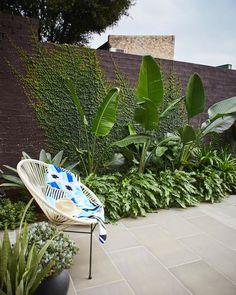 tropical garden The Balcony Garden on - gardencare Tropical Garden Design, Backyard Garden Design, Tropical Landscaping, Balcony Garden, Tropical Patio, Stone Landscaping, Tropical Gardens, Ficus Pumila, Bali Garden