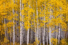 aspens  http://www.thecoolhunter.net/lifestyle