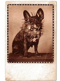 Vintage French Bulldog