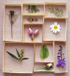 Make a nature specimen collage and put it on the wall. (Bianca Snow)