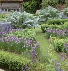 Grass paths through the herb garden..The gray spiky plant is Cardoon.