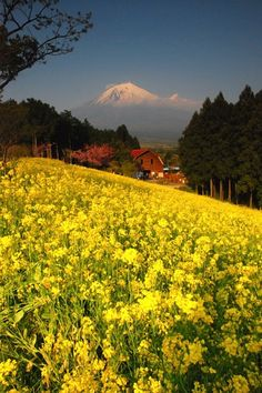 Mount Fuji, Japan. To book go to www.notjusttravel.com/anglia