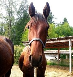Spotlight on Southside Jack http://www.jmacresrescue.com/rescue-blog/spotlight-on-southside-jack <3 Still no interest in this cutie! #horses