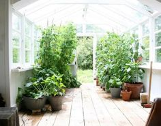 I do miss my greenhouse, but really don't miss all the hard work.  Far more than most people would think!