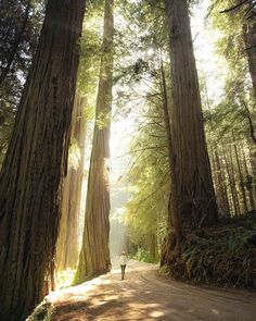 Jedediah Smith Redwoods State Park USA
