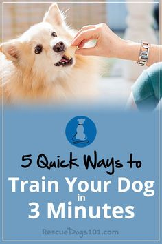 5 Quick Ways to Train Your Dog in 3 Minutes a Day – Simply take a few minutes several times a day to play and train your dog and you will be amazed on what you can accomplish. #dogtrainingtips #doggies #doglovers #dog #dogtraining #dogadopt #dogadoption #adoptadog #dogstuff #puppytraining #puppytrainer #dogtrainer #puppy #puppylove #dogtrainingtools #rescuedogs101 via @rescuedogs101