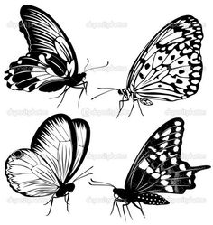 black and white butterfly White Butterfly Tattoo, Butterfly Black And White, Butterfly Drawing, Butterfly Pictures, Black And White Drawing, Butterfly Flowers, Black White, Butterflies, Borboleta Tattoo