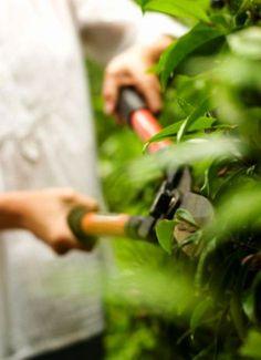 Aprende cómo tienes que podar tus arbustos y conoce algunos ejemplos de ello....