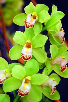 Great Flower Supply Expert Services Available Online Lindas Flores Orqudeas No Jardim Unusual Flowers, Most Beautiful Flowers, Types Of Flowers, All Flowers, Green Flowers, Tropical Flowers, Pretty Flowers, Tropical Gardens, Flowers Gif