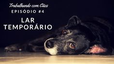 66b49316282 Meia Antiderrapante para Cães