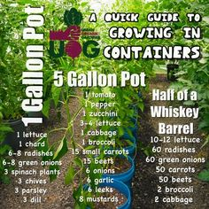 Container Vegetable Garden - Tips To Grow Your Plant - DIY Gardening Ideas - Garten Diy Gardening, Indoor Gardening Supplies, Bucket Gardening, Gardening Courses, Flower Gardening, Balcony Gardening, Apartment Gardening, Kitchen Gardening, Gardening Services
