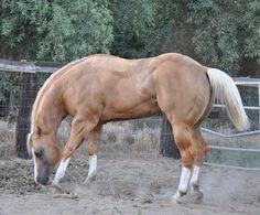 Cute Horses, Horse Love, Horse Photos, Horse Pictures, American Quarter Horse, Quarter Horses, Horse Markings, Horse Anatomy, Barrel Racing Horses