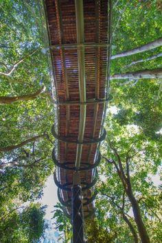 Kirstenbosch Centenary Tree Canopy Walkway 7  - Deze loopbrug zorgt voor belachelijk mooi uitzicht in Zuid-Afrika! - Manify.nl