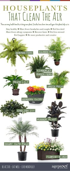 The top 10 houseplants for cleaning your indoor air. Get one today.                                                                                                                                                                                 More