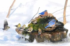 Bring In the Birds With a Homemade Bubble Rock An avian expert from Southern Indiana shows how to make a burbling fountain that migrating birds will love