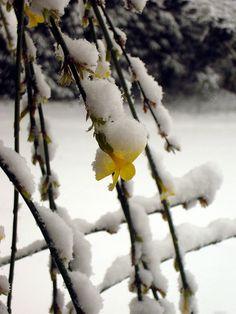 Poetry Chaikhana | Wu Men (Hui-k'ai) - Ten thousand flowers in spring, the moon in autumn